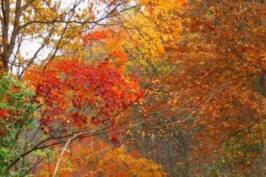 紅葉狩りの由来って知ってる?いつから狩りが草花を眺める意味に?